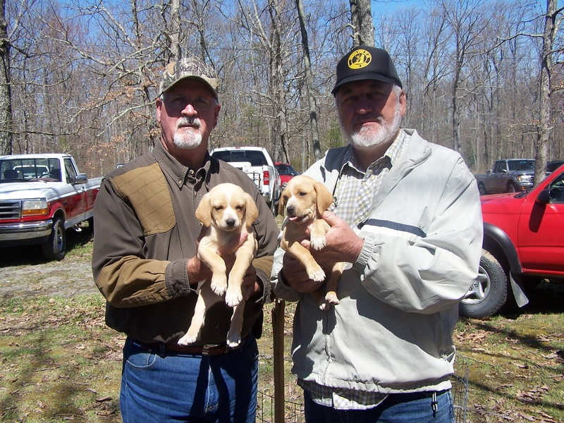 Dog Kennels Crossville Tn